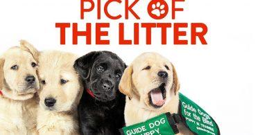 Pick of Litter Disney Plus