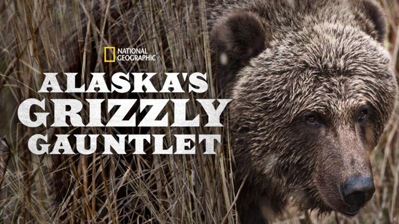 Alaska's Grizzly Disney Plus