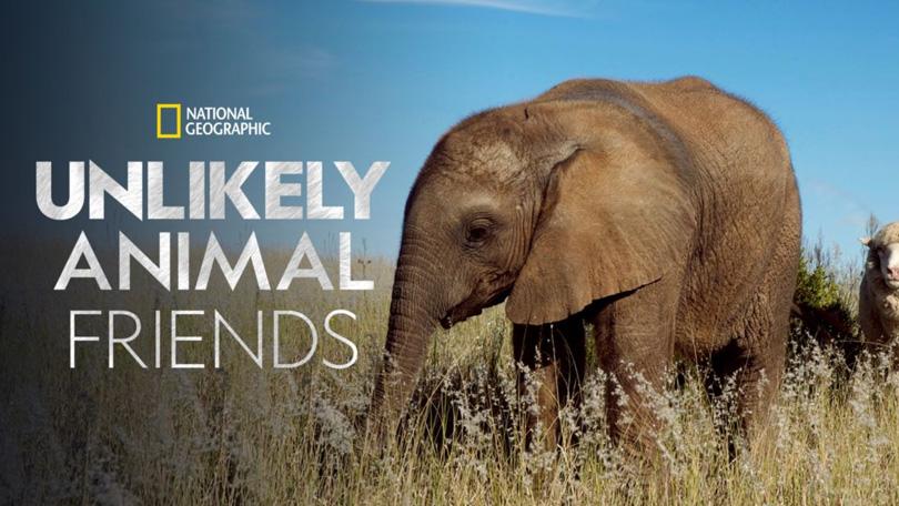 Unlikely Animal Friends Disney Plus