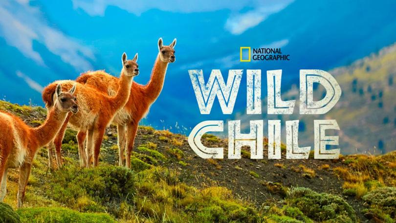 Wild Chile Disney Plus
