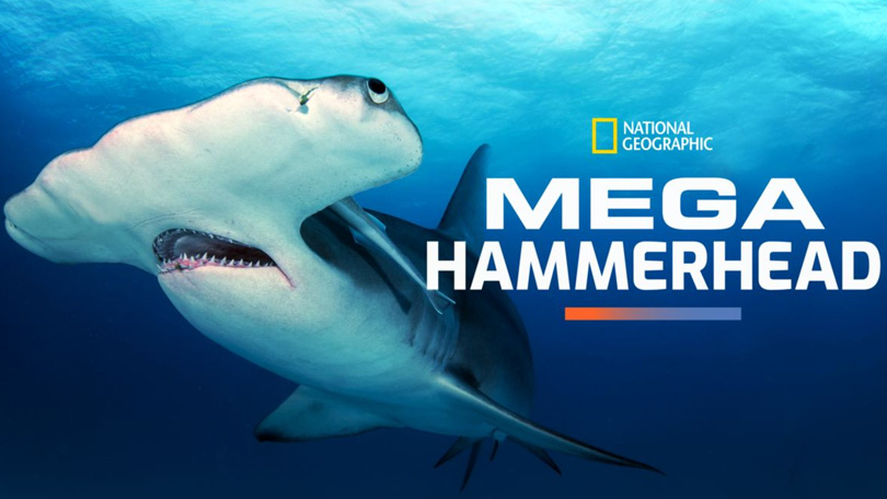 Mega Hammerhead Disney Plus
